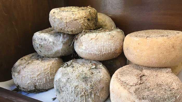 Agriturismo_Pecorino cheese zero km